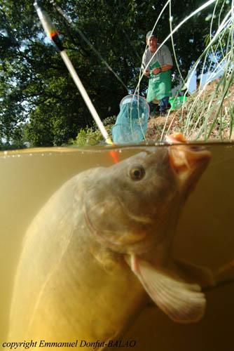La pression convenant les pêches